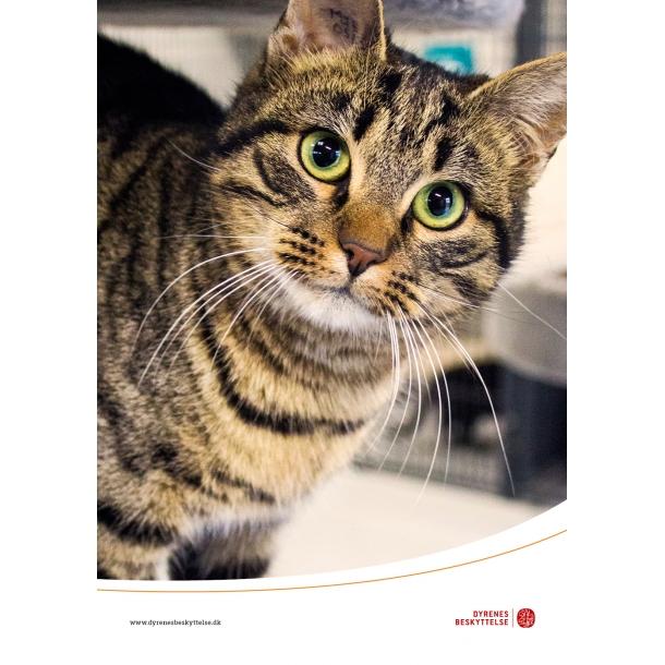 dyrenes beskyttelse katte