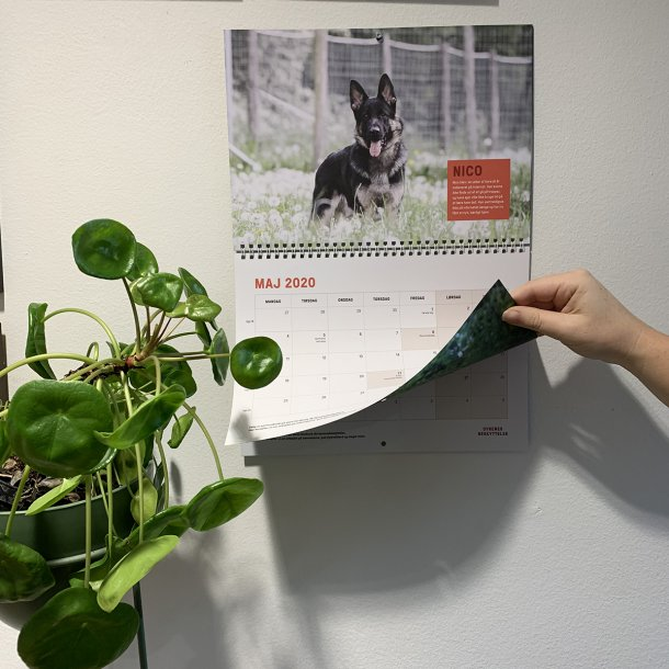 2020 Vægkalender - Hund